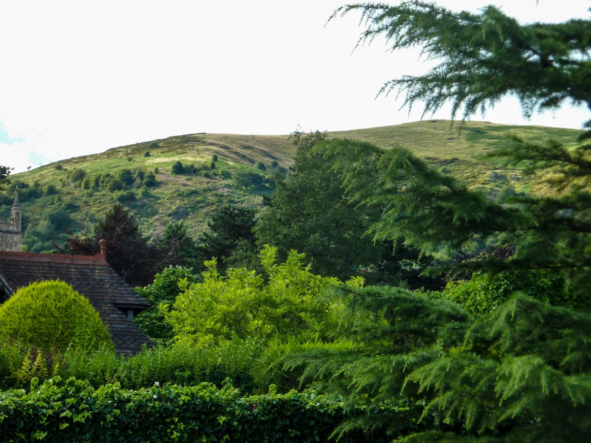 A photo of mature trees around a house in Malvern with a view of the hills in the background