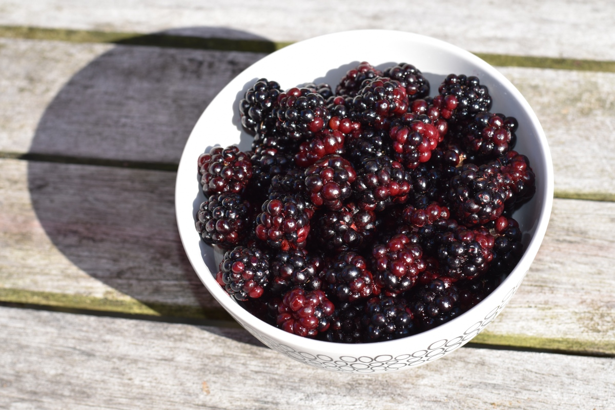 A photo of the foraged blackberries in a white bowl