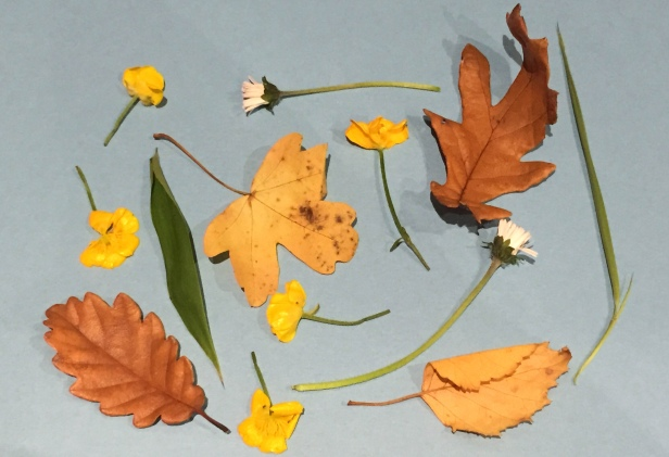 A photograph of the leaves and flowers collected by Emma's boys. Laid out on paper before they were pressed.