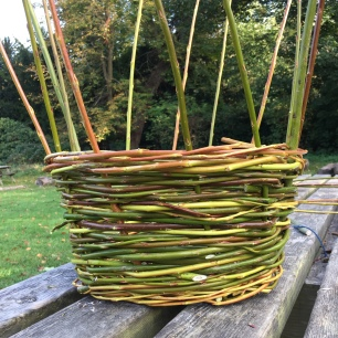 A photograph of the basket with handle rod inserted. The spokes now need to be weaved in.