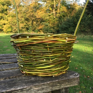 A photograph of the basket now the spokes have been weaved in.