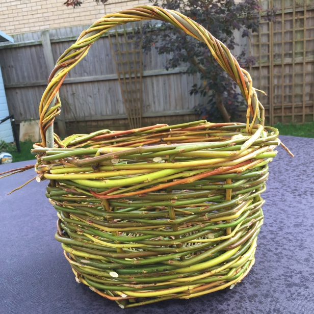 A photograph of Emma's basket back home. All that's left to do is the final bit of handle weaving.