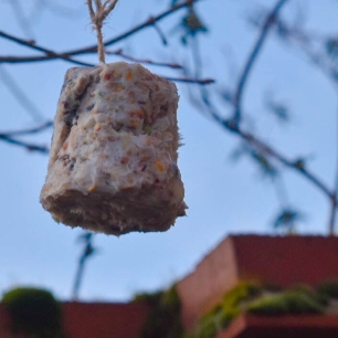 A photograph of a bird cake hanging next to a wall.
