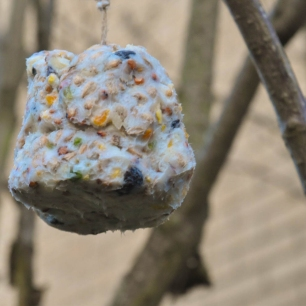 A photograph of a bird cake hanging in some branches.