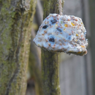 A photograph of a bird cake hanging in a some branches.